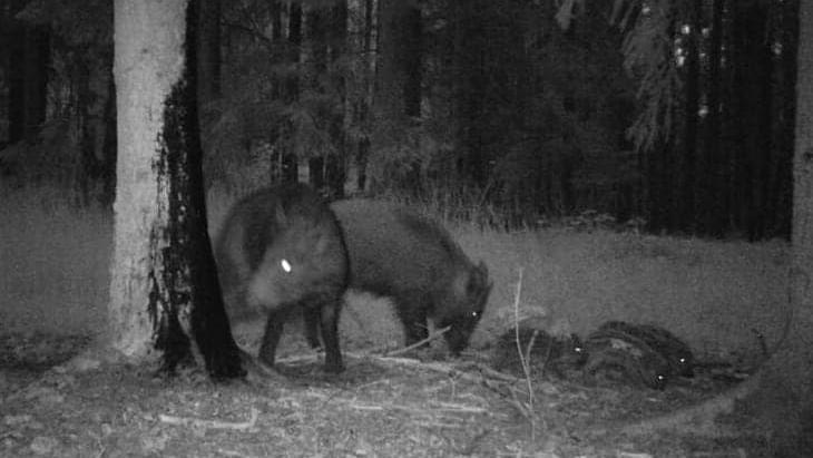 Noćni ciljnici su pomagala za lov